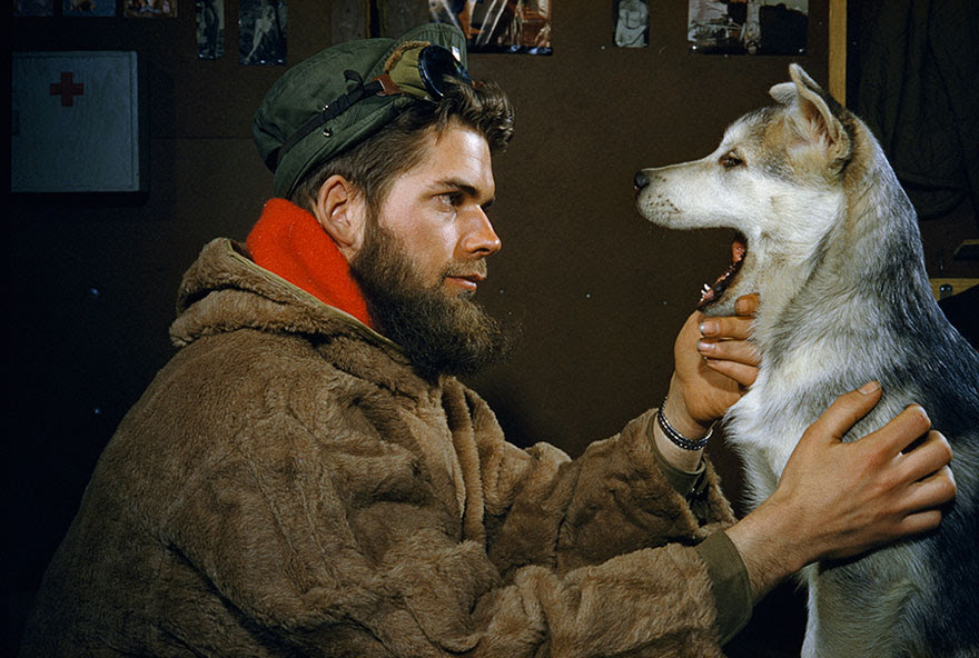 A Man Examines The Teeth Of A 10-month-old Alaskan Malamute Puppy Near The South Pole, 1957
