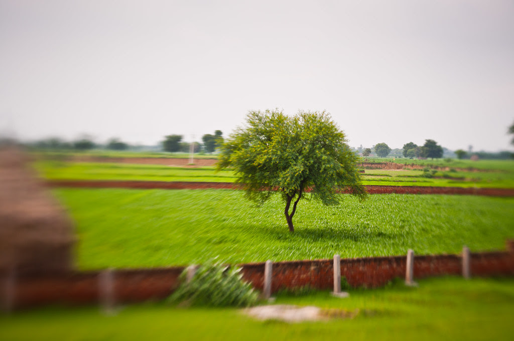 Tree shot with a lensbaby