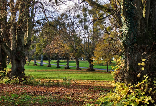 Tree lane Autumn lime trees dri - neilhoward | ello