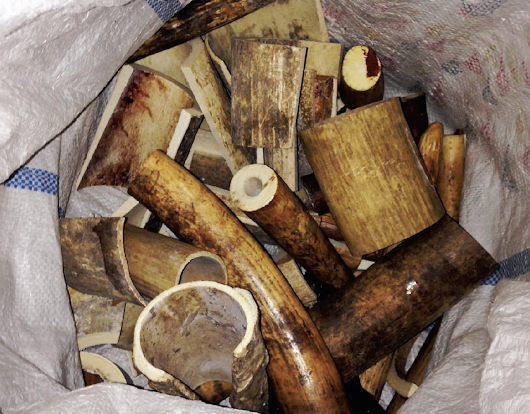 Vietnam's Illegal Ivory Trade Threatens Africa's Elephants :: ANNAMITICUS