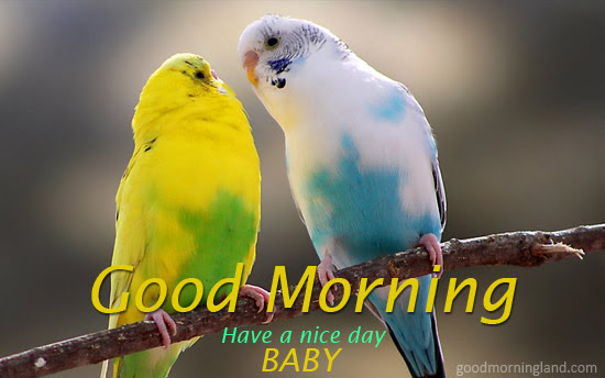 Good Morning Baby Image With Birds For Lovers Him Or Her 2017 Good