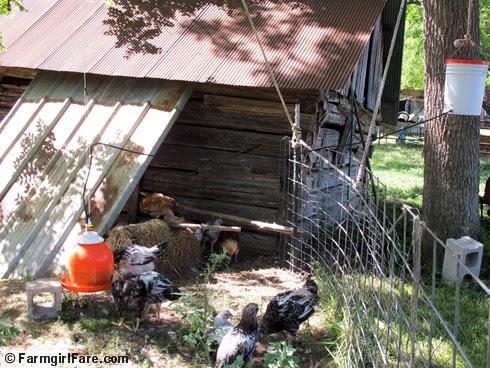 (7) New chicken waterer - FarmgirlFare.com