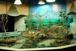 Aquarium Decorating Ideas - Real House Design