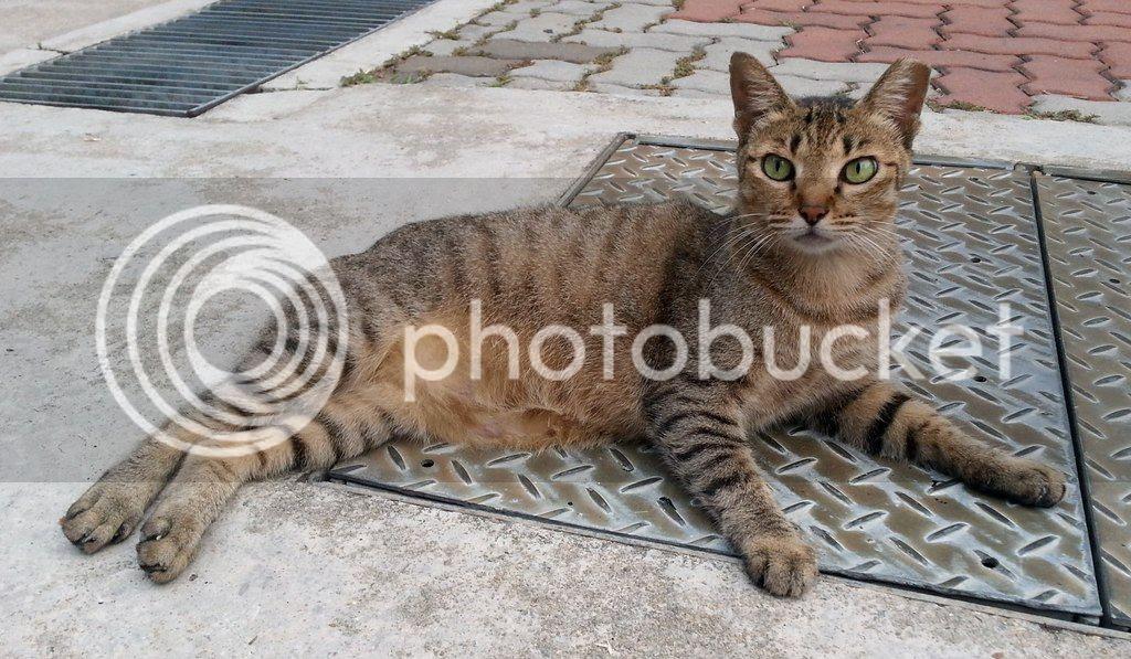 photo CatSimsP04.jpg