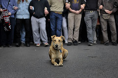 kanellos the greek rebel dog