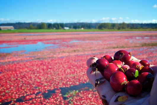 Fort Langley Cranberry Festival 2018