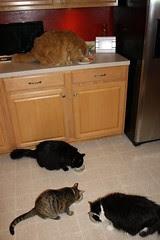 All four enjoying some Stinky Goodness
