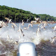 Ontario and 3 US States Continue Battle on Asian Carp