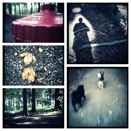 Im Wald by Beate Knappe