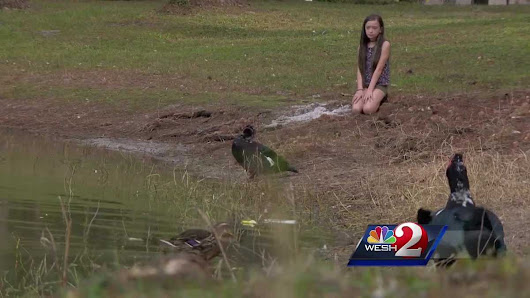 11-year-old takes action to improve safety for ducks