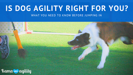 Is Dog Agility Right for You?