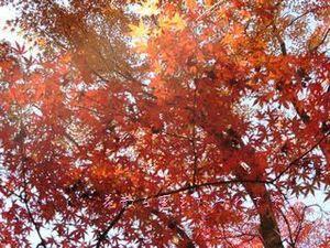 瑞宝寺公園07.JPG
