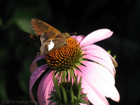 Pollinator Party 2