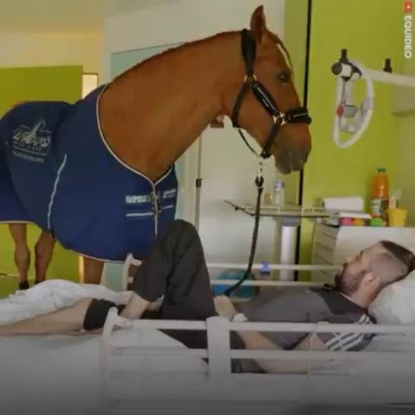 Peyo The Healing Horse Petsladycom