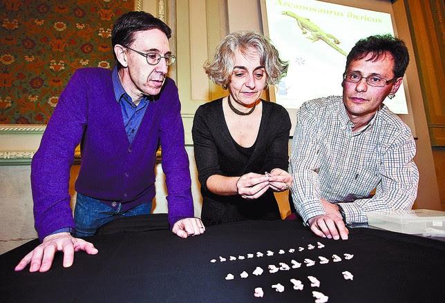 Xavier Pereda (i), Nathalie Bardet y Fidel Torcida mostraron los restos fósiles, 29 vértebras, del lagarto. Luis López Araico