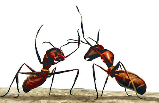 Can ants save Earth from global warming? - The Times of India