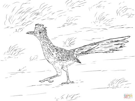 realistic greater roadrunner coloring page