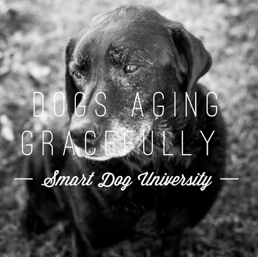 Aging Gracefully (Your Dog. Not You.) - Smart Dog University