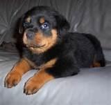 Puppy Adoption Pictures