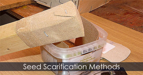 Scarify Seeds - Seed Scarification Methods for Germination