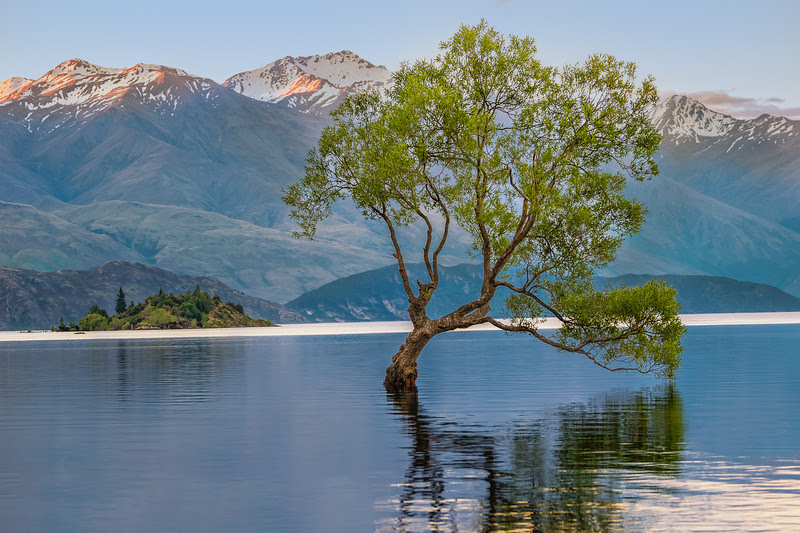 2013 Pic(k) of the week 48: The most famous tree of new Zealand