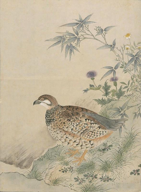 Ink + Watercolour  Bird sketch i