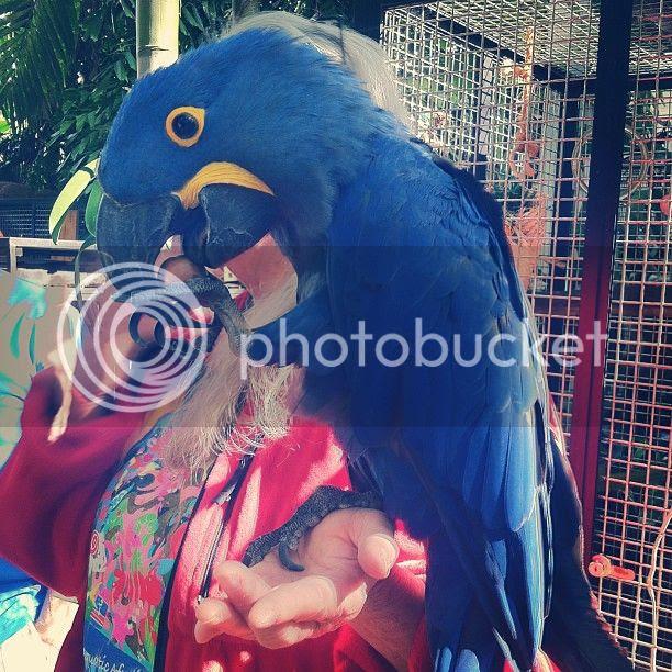 photo parrot_zps672a0858.jpg