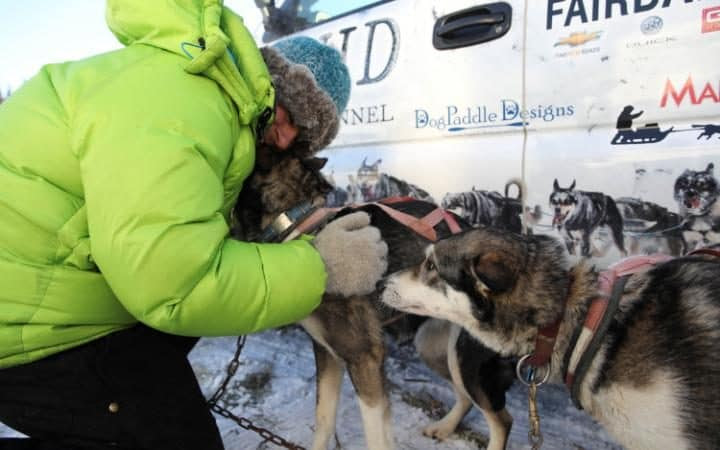 A handler for musher Cody Strathe prepares dogs for the trail at the official restart of the Iditarod.