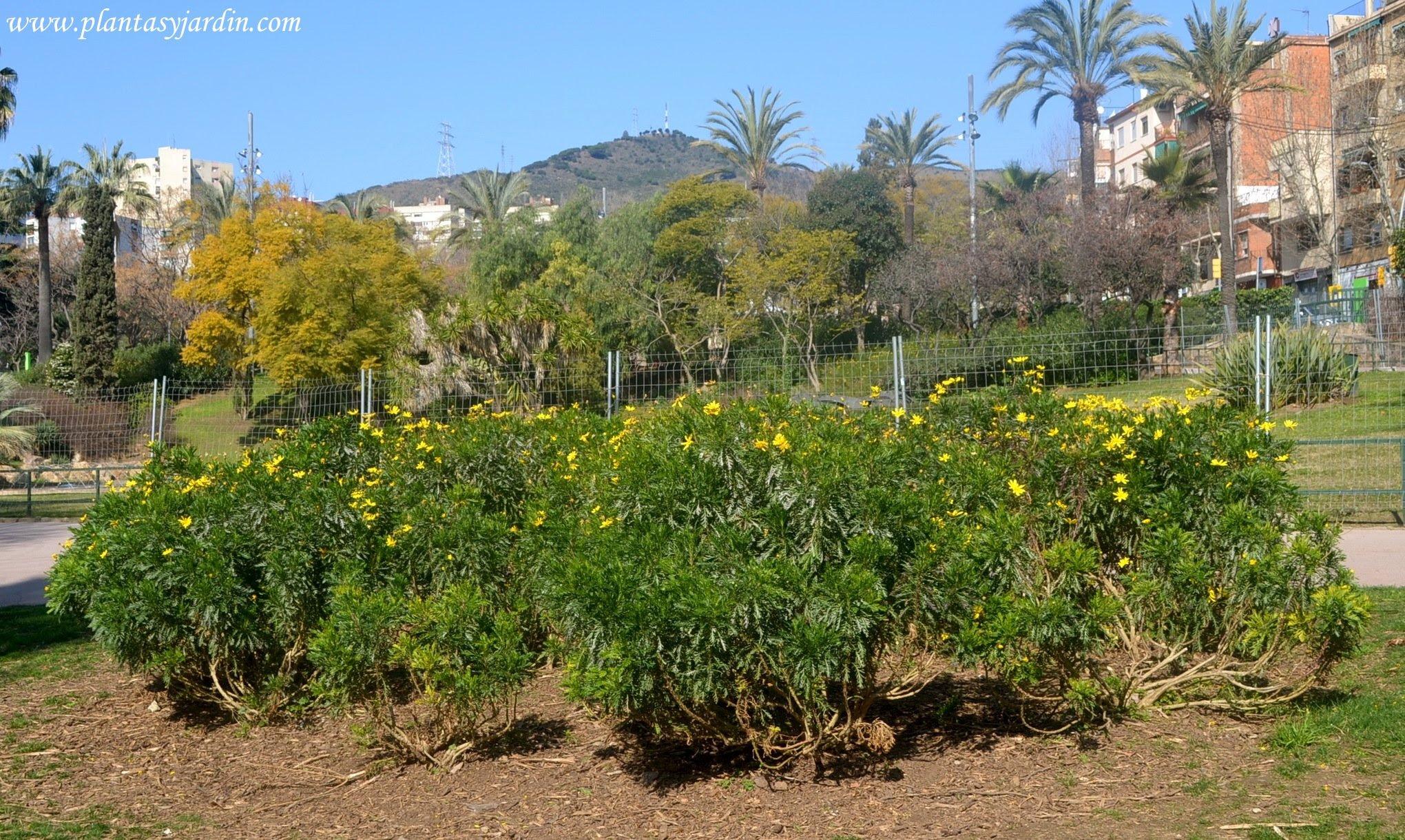 Plantas Con Flores Amarillas Nombres