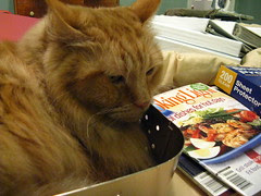 "Jasper ""helping"" Jeni with her magazines"