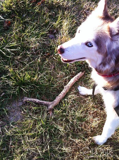 IMG_2538e Zim found a stick!