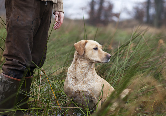Your Bird Dog: Learn to Build Trust - Game & Fish