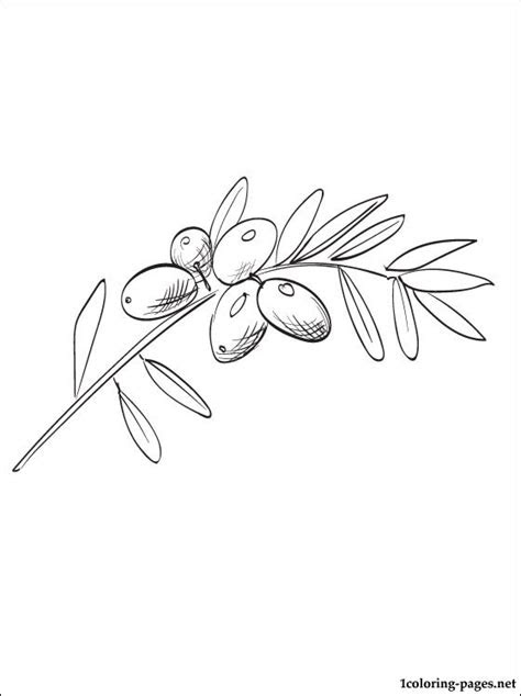 olive coloring page   coloring pages