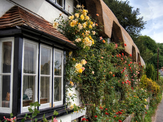 Flowers thatched cottage Wherwe - neilhoward | ello