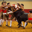 The Bullwrestlers of Portugal