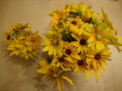 Princeton Farmer's Market flowers 8/12/11
