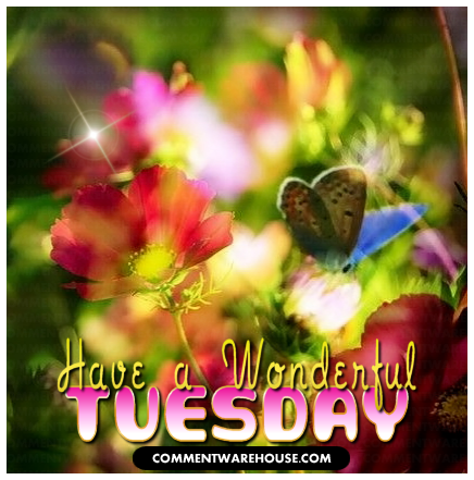 Have A Wonderful Tuesday Butterfly Garden Commentwarehouse Say