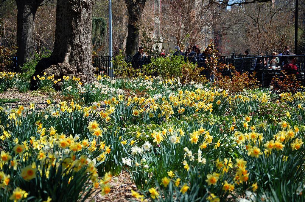Spring in Tompkins Square
