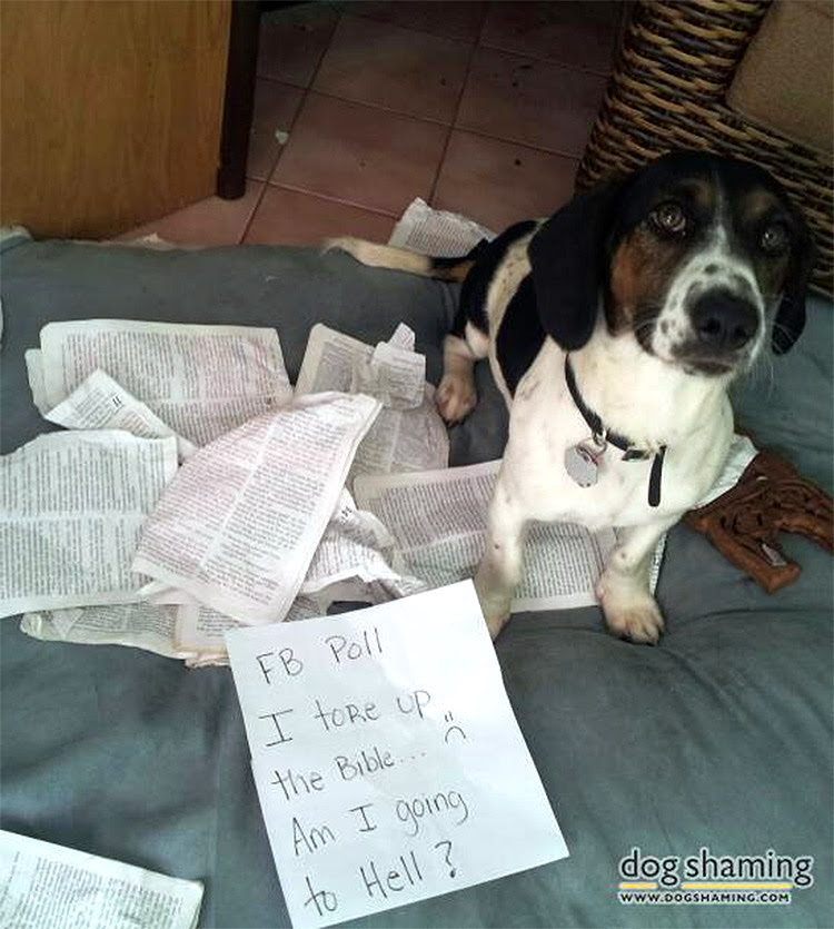 dog shaming 14 32 Hillarious Public Shaming of Dogs