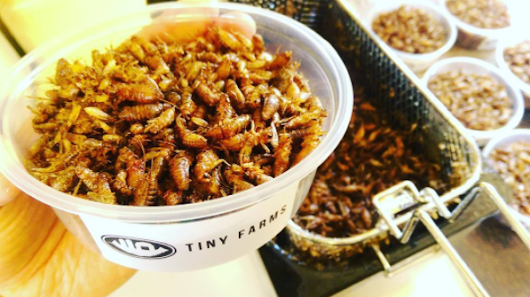 "Edible Innovations: Andrew Brentano Harvests Insects from a ""Smart Farm"""