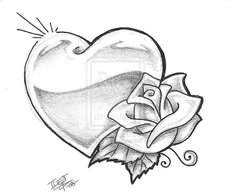 Human Heart Drawing Outline At Getdrawingscom Free For Personal