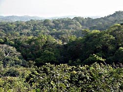 Forest Panarama