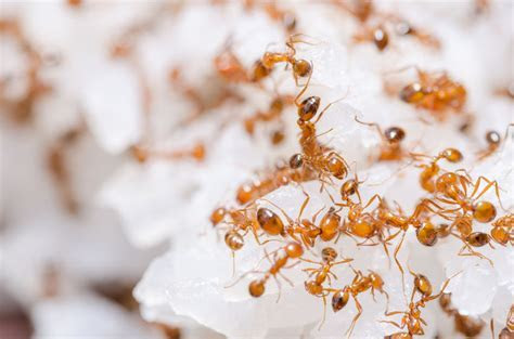 5 Ways to Get Rid of Fire Ants   Arrow Termite & Pest Control