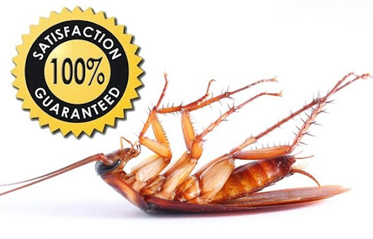 Best Pest Control Service In Bangladesh - Cockroach Control, Termite Control, bed bug control, ant & flies control, snake control, wood worm control, mosquito control, home & office cleaning service in Bangladesh