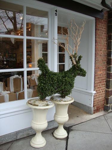 Deer in Princeton