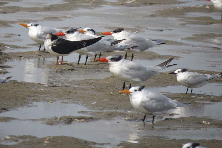 Texas 2015 three terns no use this one fors