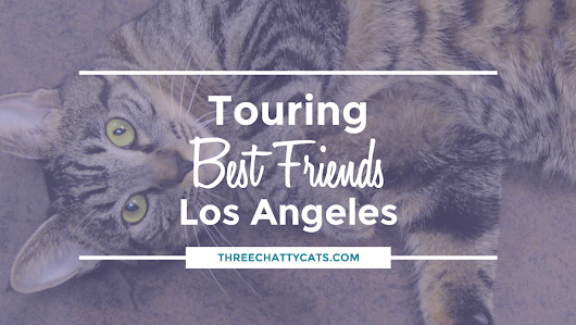 Touring Best Friends Animal Society - Los Angeles #NKLA | Three Chatty Cats