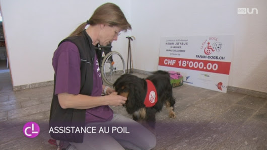 Vidéo: VS: l'association Farah-Dogs inaugure son centre de formation canine