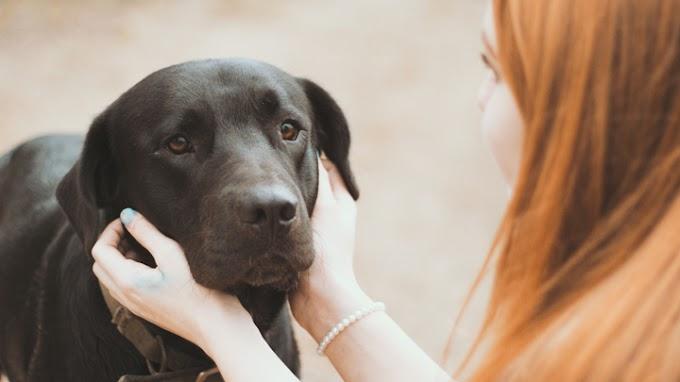 Así detectan los perros a las malas personas