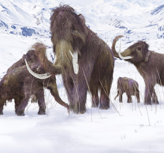 Alaska's woolly mammoths drove themselves to extinction 5,600 years ago